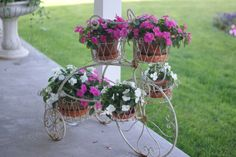 Shabby Chic tricycle planter on my porch.