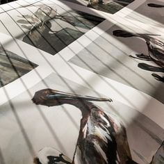 Early morning shadows cast over fine art prints waiting for the knife.  Artwork by @carolineyoungblood  #fineartprinting #fineartprints  #pelican #artwork