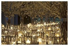 White Party Decor and Blossoming Branches Pictures
