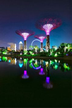 The Super Tree, Singapore