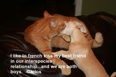 """""""I like to French Kiss my best friend in ourinter-speciesrelationship… and we are both boys."""" - Carlos  Carlos the Chihuahua and Huebie the cat love each other very much and are not afraid to show it."""