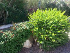 I giardini delle nostre villette a #Calasetta in #Sardegna