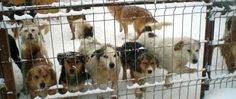 Vergessene Hunde in Rumänien warten auf den Tod
