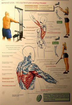 Атлетическая гимнастика - упражнения на мышцы спины 8-1