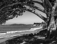 Beautiful Butterfly Beach in Santa Barbara, CA  Black & White Fine Art Photographic Print in Various Sizes