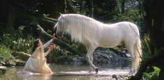 Deerland ➳ Lágrimas de unicornio
