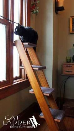 Cats Toys Ideas - This ladder for your cat to perch on, which is also very aesthetically pleasing. - Ideal toys for small cats Cat Club, Cat Hacks, Cat Towers, Ideal Toys, Cat Shelves, Cat Enclosure, Cat Room, Pet Furniture, Fine Furniture