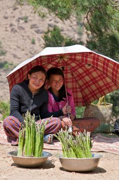 139810295-bhutan-girls-selling-excellent-quality-farm-gettyimages.jpg (337×509)