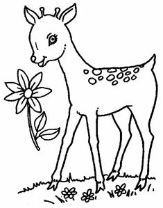 Free Printable Deer Coloring Pages For Kids Things that
