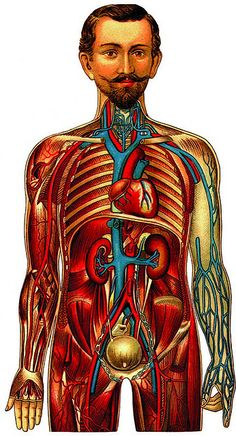 "Anatomical Illustration, ""Images of the Human Body,"" Pepin Press"