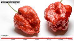 Ardômetro: saiba quais as pimentas mais ardidas do mundo | Superinteressante