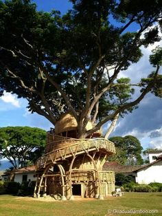 Biomemetic, bamboo treehouse in Colombia..google for story~