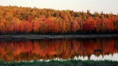Fall foliage  Maine, GO to New England for the fall