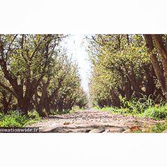 10 Nature Ideas Nature Apple Garden Central District