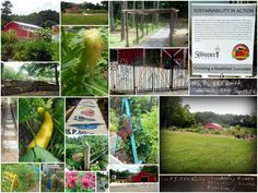 The community garden in the City of Suwanee, GA: Harvest Farm at White Street Park.  We served on the design team!
