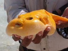 7 Of The Most Frighteningly Bizarre Ocean Creatures: http://all-that-is-interesting.com/bizarre-ocean-creatures/