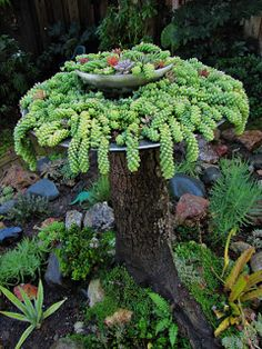 Succulents in a dish planter on top of a tree stump