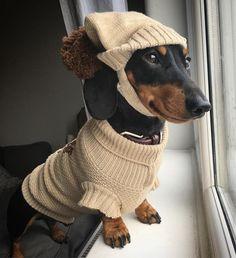 So cute! I love dachshunds