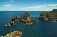 Diving Poor Knights Islands Marine Reserve - New Zealand www.seasonz.co.nz/