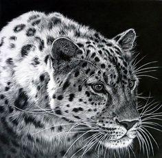 Realistic Animal Pencil Drawings (22)