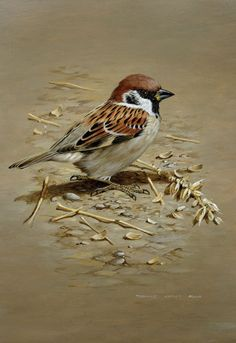 aan #birdart #bird #wildlifeart