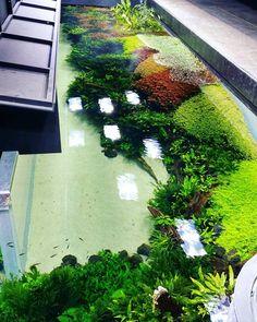 33 Aquascaping Ideas for Inspirations Diskus Aquarium, Aquarium Garden, Aquarium Landscape, Nature Aquarium, Aquarium Design, Planted Aquarium, Tropical Garden, Tropical Fish, Aquatic Plants