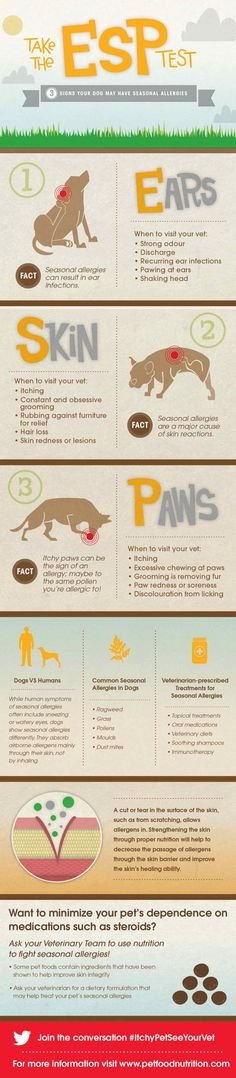 How to detect seasonal allergies in your dog #ItchyPetSeeYourVet #Dogs