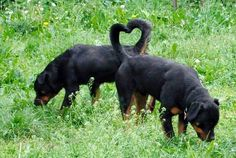 Now that's love!! Perfectly timed picture #rottweiler