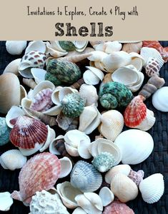 Shell Activities for Kids~Play, Explore and Create with Shells! Shell Activities for Kids~Play, Explore and Create with Shells! Beach Theme Preschool, Beach Activities, Nature Activities, Preschool Science, Hands On Activities, Learning Activities, Preschool Kindergarten, Creative Activities, Sensory Activities