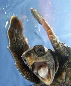 Sea turtle ♥Follow us♥