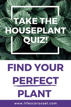 Not sure which type of houseplant to get? Take this houseplant quiz to find your PERFECT match! Answer these easy questions to find the right plant for you! Colorful Plants, Green Plants, House Plant Care, House Plants, Indoor Plants, Indoor Gardening, Potted Plants, Growing Vegetables Indoors, Types Of Houseplants