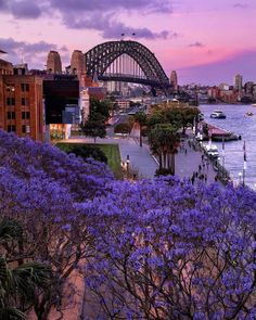 My friend took this picture of the Sydney Harbour Bridge with her iPhone 5 Sydney Australia Travel, Sidney Australia, Australia Tourism, Perth Australia, Sydney City, Sydney Harbour Bridge, Places To Travel, Places To See, Australia Wallpaper