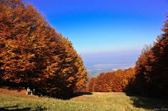 Autumn by Edina Janega on 500px.