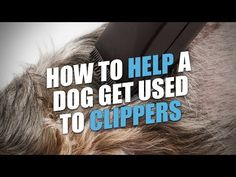 Most dogs are scared of clippers and experience grooming anxiety. Here's how to help a dog get used to pet clippers and keep your dog calm during grooming. Dog Grooming Clippers, Dog Grooming Tips, Dog Care Tips, Pet Care, Training Tips, Dog Training, Dog Body Language, Flea Treatment, Dog Anxiety