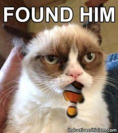 Found him. #catoftheday