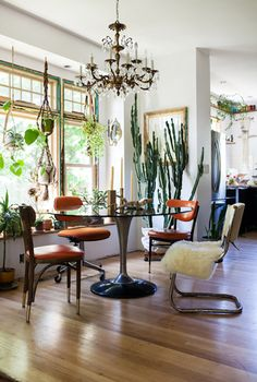 plants in the dining room of artist emily katz. / sfgirlbybay