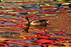 Culorile toamnei reflectate în apă