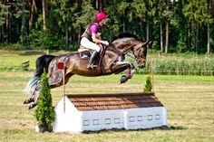 Horses for sale - Danish Wamblood Horse Lithuania Eventing For sale Constanza