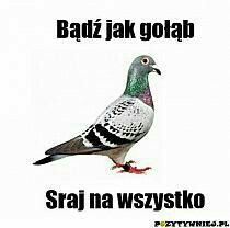 Miej wyjebane, a będzie ci dane Stupid Funny Memes, Wtf Funny, Funny Cute, Weekend Humor, Word Sentences, Man Humor, Best Memes, Quotations, Funny Animals