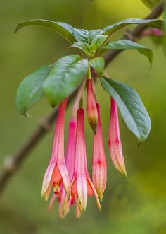 #flowers #flower #macro #petal #petals #nature #beautiful #love #pretty #plants #blossom #sopretty #spring #summer