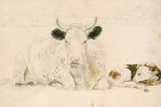 A cow and a calf lying down - pencil and watercolour on wove paper, 264 X 394 mm - This album contains a large number of drawings of domestic and farm animals by the Victorian painter John Frederick Lewis. Some of the drawings appear to be the artist's childhood sketches, while others relate to paintings carried out at the beginning of his adult career, up to c. 1832.