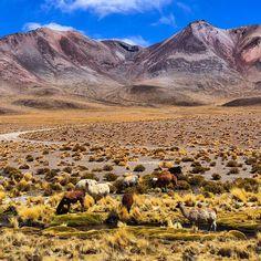 Alguém com saudade da gente por aqui? Sumimos um pouco mas em breve voltaremos com muitas novidades. Tem viagem chegando! Quem adivinha nosso próximo destino? Pra relembrar uma foto do passeio ao Salar de Uyuni na Bolívia que conhecemos em Setembro/2016 #NerdsNaBolívia