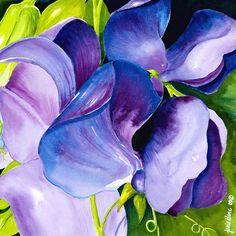 Purple Sweet Peas - Janis Ilene Images