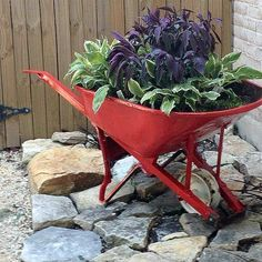 Painted Wheelbarrow--Old rusty wheelbarrow converted to freshly painted container garden.  Sweet.