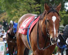 2016-10-29 スワンS アルビアーノ(牝4) 518kg