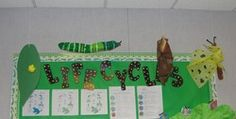 lifecycle bulletin board with hanging cycle