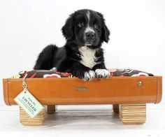 The perfect upcycled pet bed
