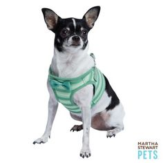 We love a good striped harness! #MarthaStewartPets only @petsmartcorp | #dogfashion #dogharness