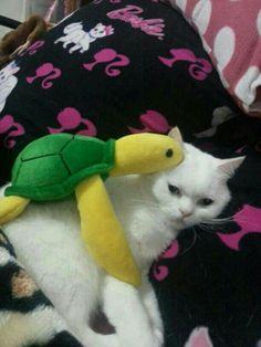 Turtle and princess..