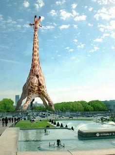 The Eiffel Giraffe Giraffe Decor, Giraffe Art, Cute Giraffe, Giraffe Pictures, Funny Animal Pictures, Cool Pictures, Animals And Pets, Funny Animals, Cute Animals
